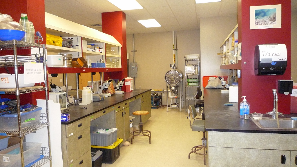 lab benches with various lab equipment and chemicals