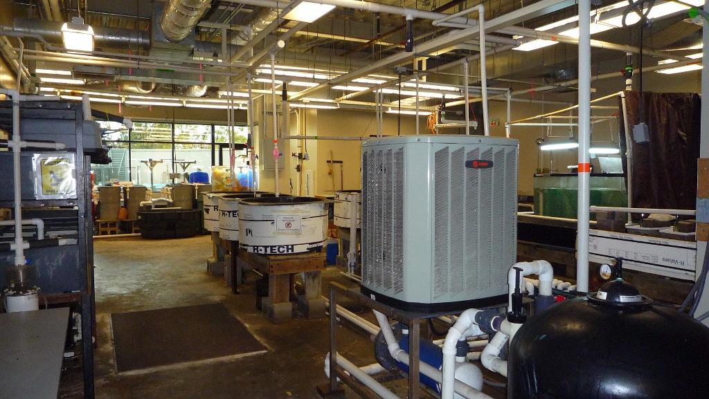 indoor recirculating seawater system