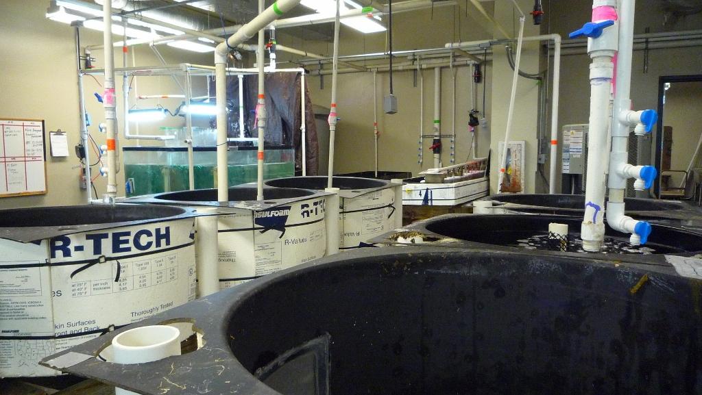6 circular black tanks