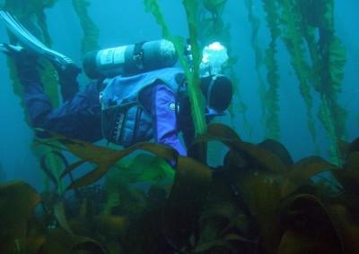 underwater shot of Matt Edwards SCUBA diving in a kelp forest