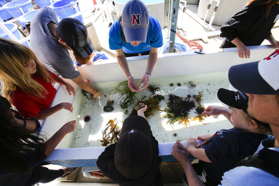 people gather around a tank filled with marine organisms