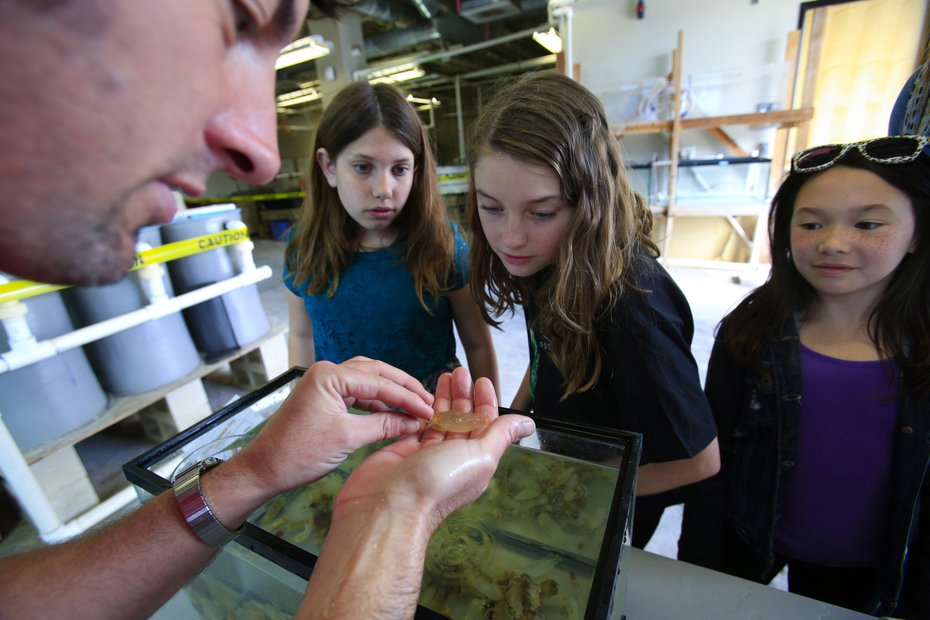 a man shows three young girls a sea squirt
