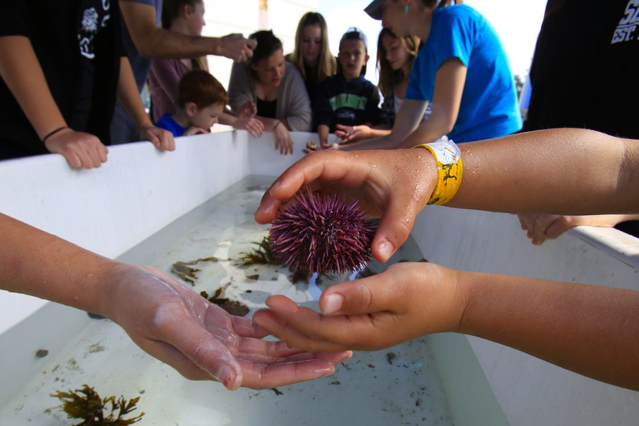 hands passing a purple sea urchin